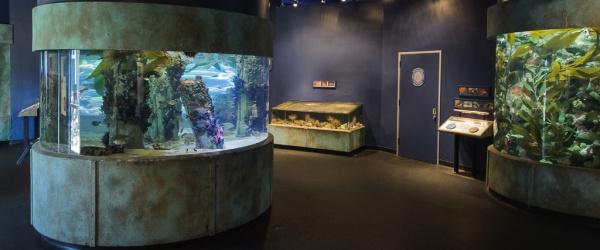 Aquarium of the Bay, San Francisco